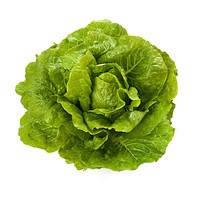 Октавиус - семена салата тип Ромэн дражирование 1 000 семян, Rijk Zwaan