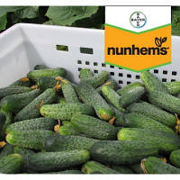 Огурец Аякс F1 Nunhems 1000 семян