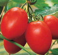 КОЛИБРИ F1 - семена томата индетерминантного 250 семян, CLAUSE