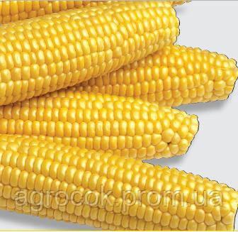 Выращивание кукуруза мегатон f1 17