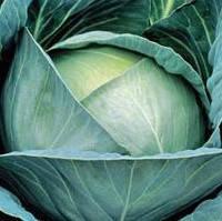 АГРЕССОР F1 семена капусты белокочанной 2 500 семян, Syngenta