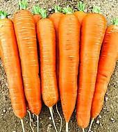 Колтан F1 - семена моркови Нантес/Флакке (1,6-1,8) 100 000 семян, Bayer Nunhems