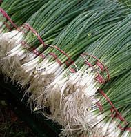 Герда 50г. семена лука на перо