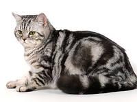 Hills Pet Nutrition-корм для взрослых кошек