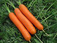 Морковь гибрид ранняя САТУРНО F1 Фасовка 25000 и 100 000 сем.