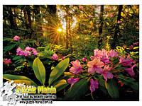 Пазл Heye - Рододендроны (Magic Forests Rhododendron)