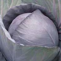 РОМАНОВ F1 - семена капусты краснокочанной 2 500 семян, Hazera