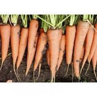 Семена моркови Скарла, Clause (Франция), упаковка 0,5 кг