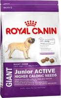 Royal Canin (Роял Канин) Giant junior Active 15кг (для щенков от 8 до 18-24мес.)