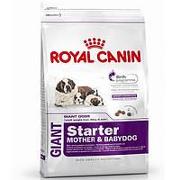 Royal Canin (Роял Канин) Giant Starter 15кг (первый прикорм для щенков и для беременных и кормящих сук)