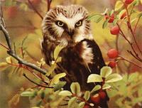 """Набор для вышивания картин стразами полной выкладки """"Мудрая сова"""" Размер: 40*50 см Код 198376"""