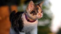 Украинский стартап Moggie привлек инвестиции в Швеции и создает умный ошейник для котов