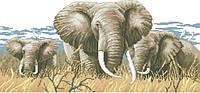 Рисунок на канве для вышивки нитками мулине 12163 Слоны