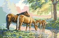 Рисунок на канве для вышивки нитками мулине 71513 Лошади у реки