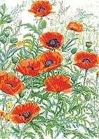 Рисунок на канве для вышивки нитками мулине 61273 Маки
