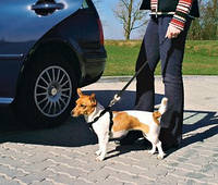 Trixie TX-1290 автомобильная шлея S 30-60 см Вест-хайленд-терьер