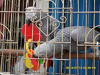Игрушка для попугая (Фруктовое Ассорти) Пластиковые формы