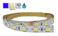 Светодиодная лента LED, SMD 5050, синий, 60 шт/м, влагозащищенная IP65