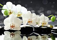 """Схема для вышивки бисером """"Белая орхидея"""", цветы"""