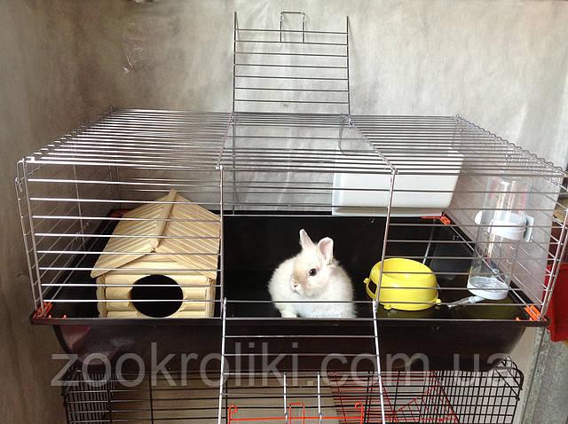 Клетки для кроликов в картинках
