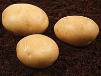 Орла насіннєва картопля овальна ультрарання 1 репродукція 20 кг