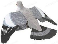 Чучело Pigeon with wings