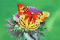 Рисуем иглой ML-0002 Золотая бабочка, набор для вышивания гладью