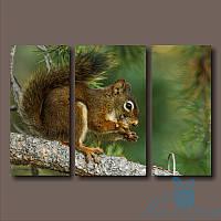 Модульная картина Белочка с орешком из 3 фрагментов
