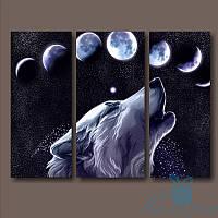 Модульная картина Волк и звездное небо из 3 фрагментов