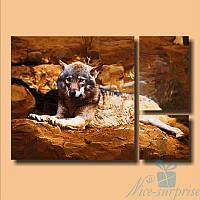Модульная картина Волк на камнях из 3 фрагментов