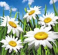 Фотообои с цветами Ромашки