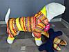 Дождевик цветной Dogs Bomba M-12 размер-8(L)