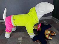 Велюровый костюм Dogs Bomba D-14 размер-6(M)