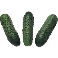 Семена огурца корнишон Соната F1 250 гр. Rijk Zwaan