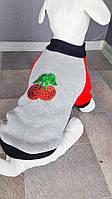 Толстовка Вишенка Dogs Bomba Y-4 размер 3(XS-2)