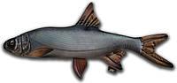 Игрушка антистрессовая 3K Fish Жерех малый 50х25см