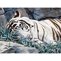 "Картина-раскраска по номерам ""Белый тигр"" 40х50 см ТМ Идейка"