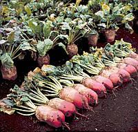 Семена высокоурожайной кормовой свеклы Рекорд Поли
