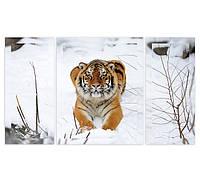 """Модульные картины """"Тигр в снегу"""""""
