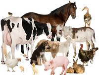 Спреи, крема и мази для животных