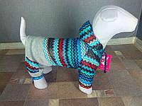 Костюм(куртка+штаны) Dogs Bomba С0-2 разм 6(М), фото 1