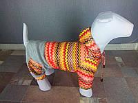 Костюм(куртка+штаны) С0-3 разм 4(S)(28см) Dogs Bomba, фото 1