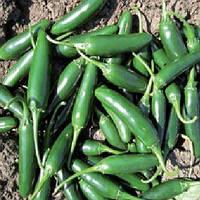 Семена строго перецы Хотвей F1 1000 семян Lark Seeds