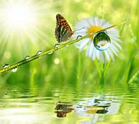 "Фотообои ""Бабочка над водой"", Фактурная текстура (холст, иней, декоративная штукатурка)"
