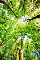 """Фотообои """"Кроны деревьев"""", Фактурная текстура (холст, иней, декоративная штукатурка)"""