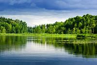 """Фотообои """"Лес вокруг озера"""", Фактурная текстура (холст, иней, декоративная штукатурка)"""