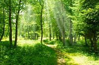 "Фотообои ""Лес"", Фактурная текстура (холст, иней, декоративная штукатурка)"