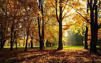 """Фотообои """"Осень в парке"""", Фактурная текстура (холст, иней, декоративная штукатурка)"""