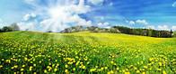 """Фотообои """"Солнечное поле с одуванчиками"""", Фактурная текстура (холст, иней, декоративная штукатурка)"""