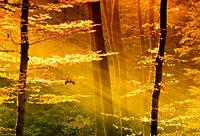 """Фотообои """"Солнечный лес"""", Фактурная текстура (холст, иней, декоративная штукатурка)"""